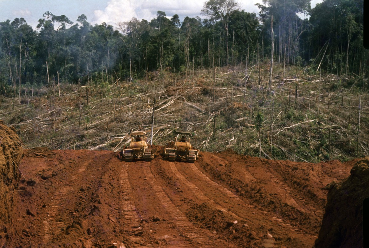 Für die Futterproduktion wird wertvoller Urwald in Südamerika gerodet.