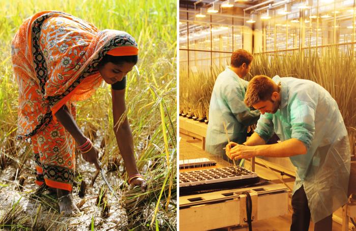 Alte und neue Formen der Landwirtschaft - Bäuerin in Indien und Labormitarbeiter von Bayer CropScience