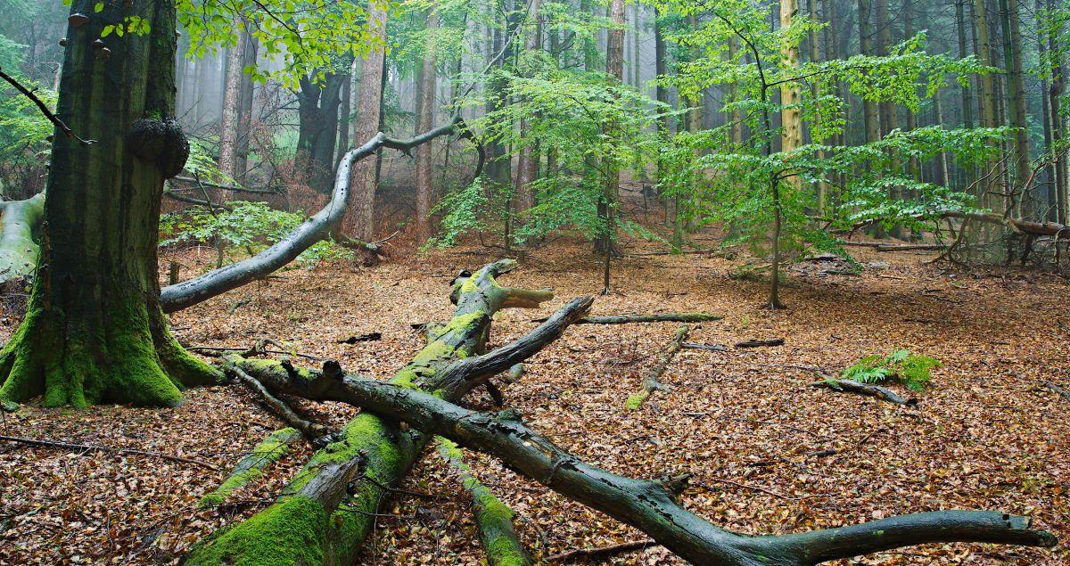 Wald - Foto: Michael Nübel
