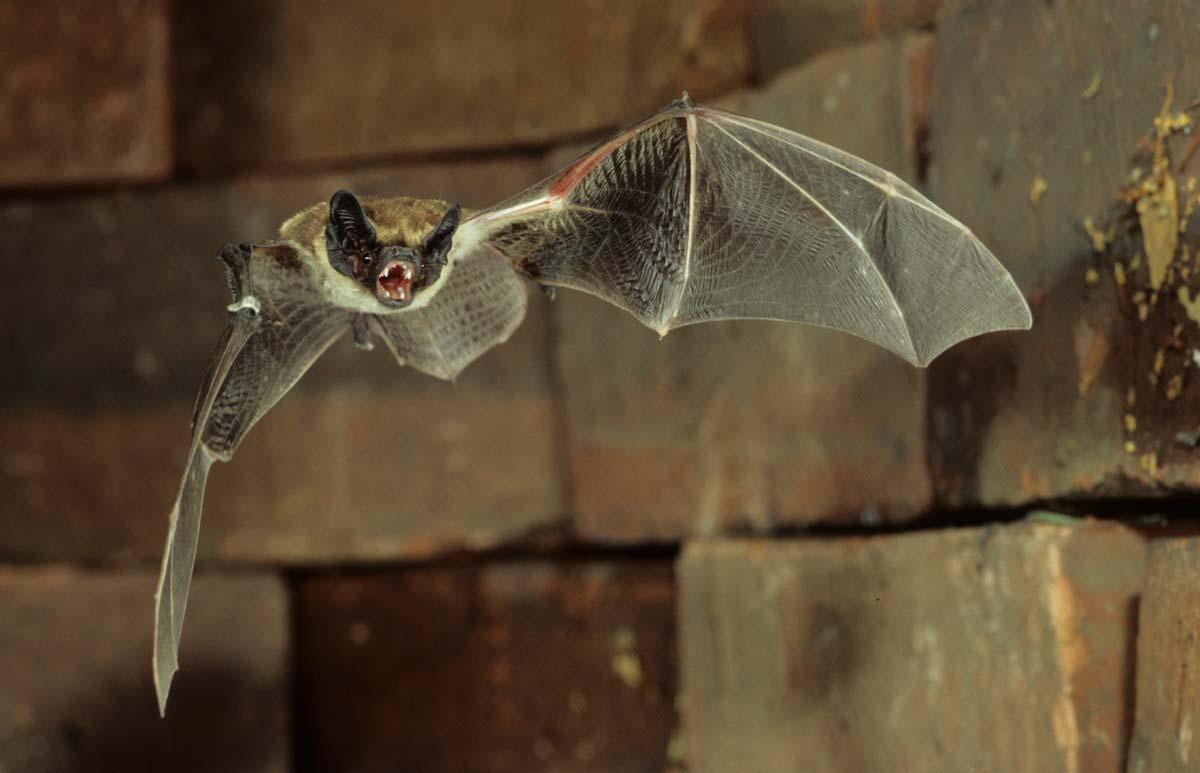 BatCities