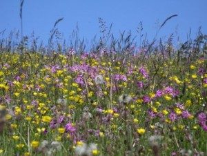 Artenreiches Grünland braucht den Schutz der EU. Foto: Beate Lezius
