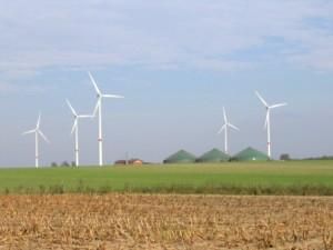Windkraft kann ein Problem für Greifvögel sein - vor allem in Kombination mit intensiver Landwirtschaft.