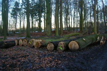 Holzeinschlag in Deutschland Foto: NABU Neumünster