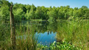 Tarbeker Moor Foto: NABU/Jens Kube