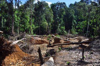 Das sensible Ökosystem Wald ist durch Abholzung, fortschreitende Flächenumwandlung in landwirtschaftliche Anbauflächen und Goldabbau massiv gefährdet. Foto: Andrea Schell