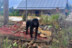 Der Kahlschlag bedroht die Artenvielfalt auf der Insel. Foto: Andrea Schell