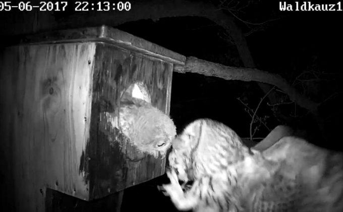 Männchen bringt Vogel zum Füttern, vermutlich eine Meise.