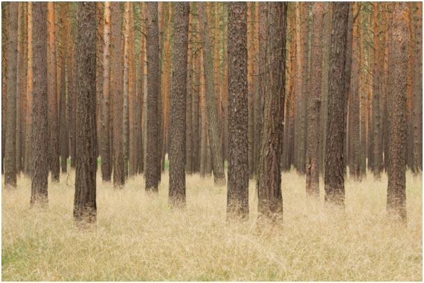 Erschreckend: 70 MMillionen Kubikmeter Waldfläche werden jedes Jahr in Deutschland zu Monokulturen umgewandelt