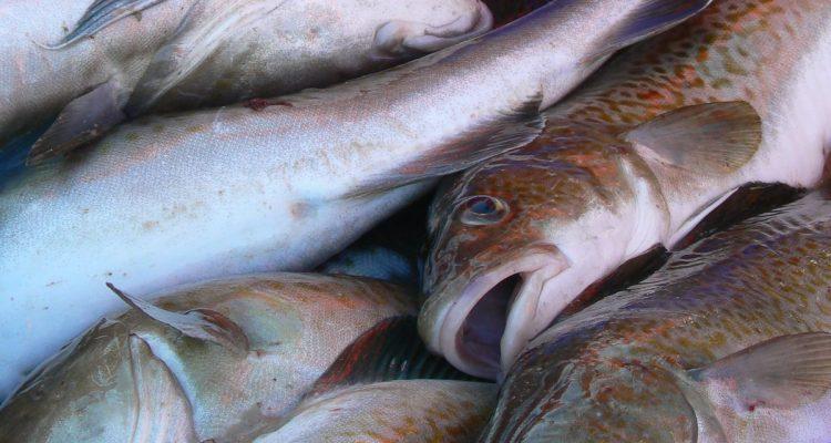 Einigung auf Fangquoten