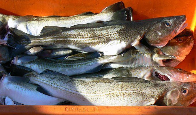 Fischerei in der Nordsee – Woche der Entscheidungen