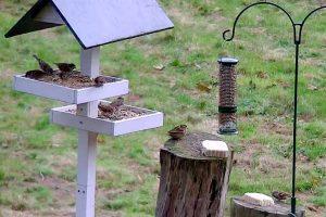 NABU Wintervogel-Webcam
