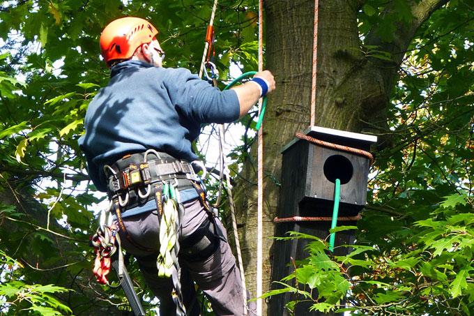 Ein Baumsteiger am Nistkasten - Foto: hans-Jürgern Storck
