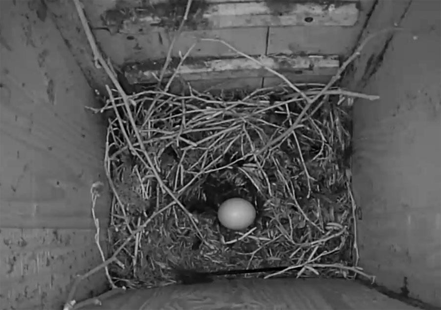Das erste Ei ist da
