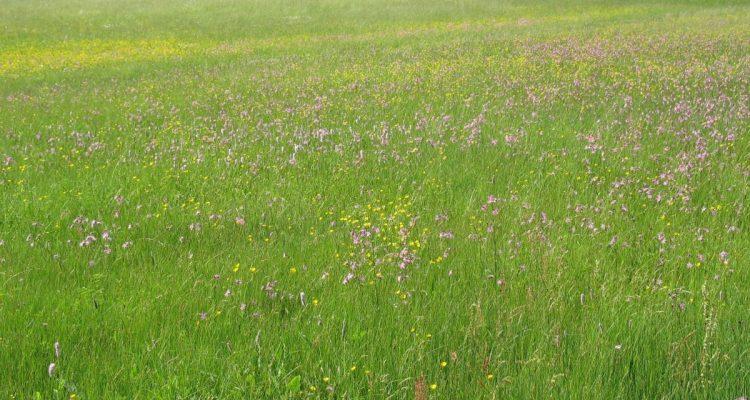 MOIN Feldarbeit: Atmosphärische Klänge aus der Wiesenlandschaft
