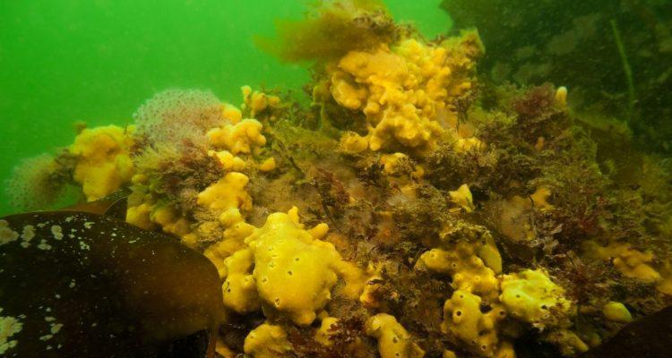 Meeresschutzgebiete – warum das heutige Konzept bedrohten Arten nicht hilft