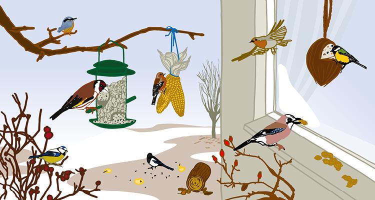Vogelfütterung im Winter – Darauf müssen Sie achten!