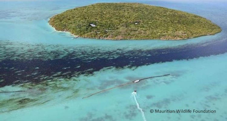 Ölpest trifft Tropenparadies: Warum die Havarie in Mauritius so verheerend ist