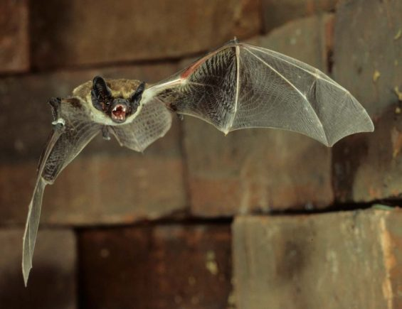 Willkommen bei BatCities