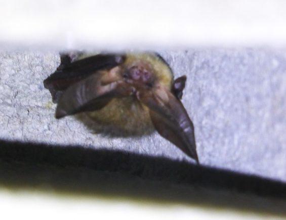 BatCity Leipzig #2 – Ein Tag auf den Spuren der Fledermäuse