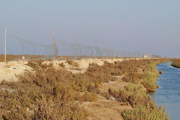 Vogelfangnetze an Ägyptens Mittelmeerküste. Foto: Basem Rabia