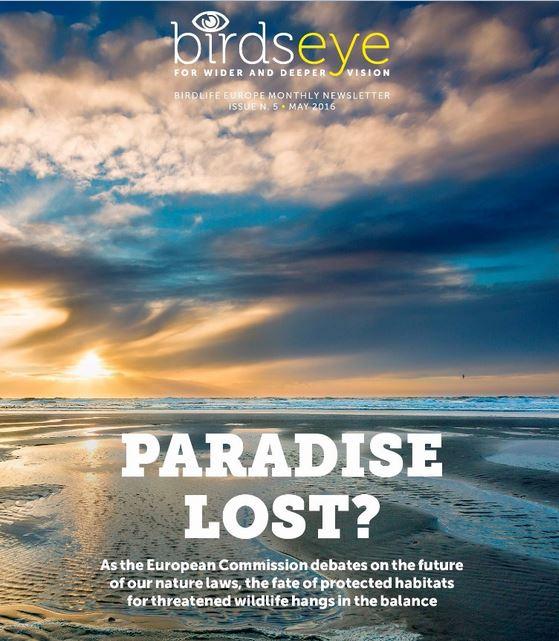 BirdsEye – BirdLife Europe Newsletter