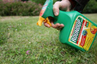 """Glyphosat ist das weltweit am meisten eingesetzte Herbizid. Unter dem Handelsnamen """"Roundup"""" wird es auch deutschen Kleingärtnern angepriesen, als Wundermittel für blitzsaubere Rosenbeete und unkrautfreie Gartenwege."""