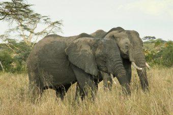 zwei-elefanten-barbara-maas