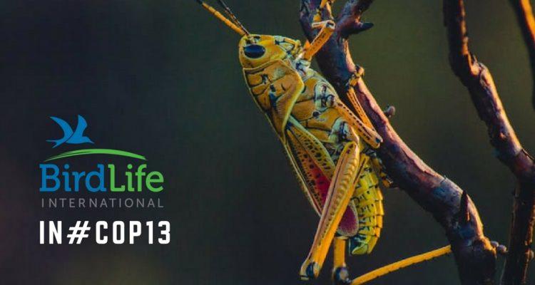 COP-Corner: Die weltbesten Gebiete für die biologische Vielfalt