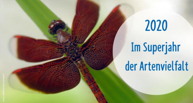 Superjahr 2020: Verhandlungen zum Schutz der Biologischen Vielfalt gestartet