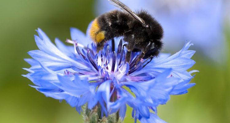 Das kleine Insektenschutzgesetz