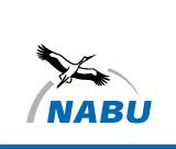 Der NABU hat Weißstörche besendert, um die Zugrouten der Vögel besser untersuchen zu können. Verfolgen Sie die Reise der Störche in unserem Blog.