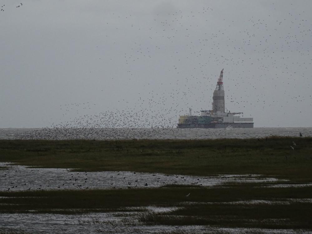 Land unter - die Vögel flogen um die Insel auf der Suche nach einem trockenen Landeplatz